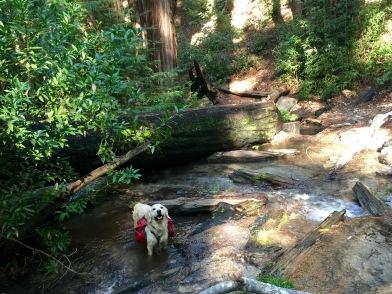 Backpacking beginner Ventana Wilderness