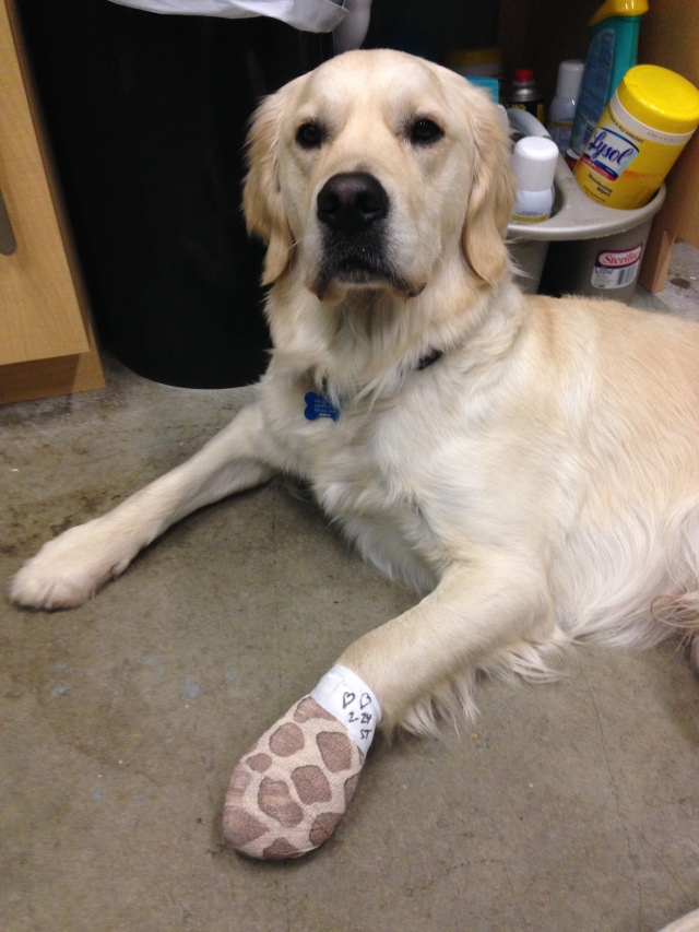 A badly cut paw pad is a deal-breaker!