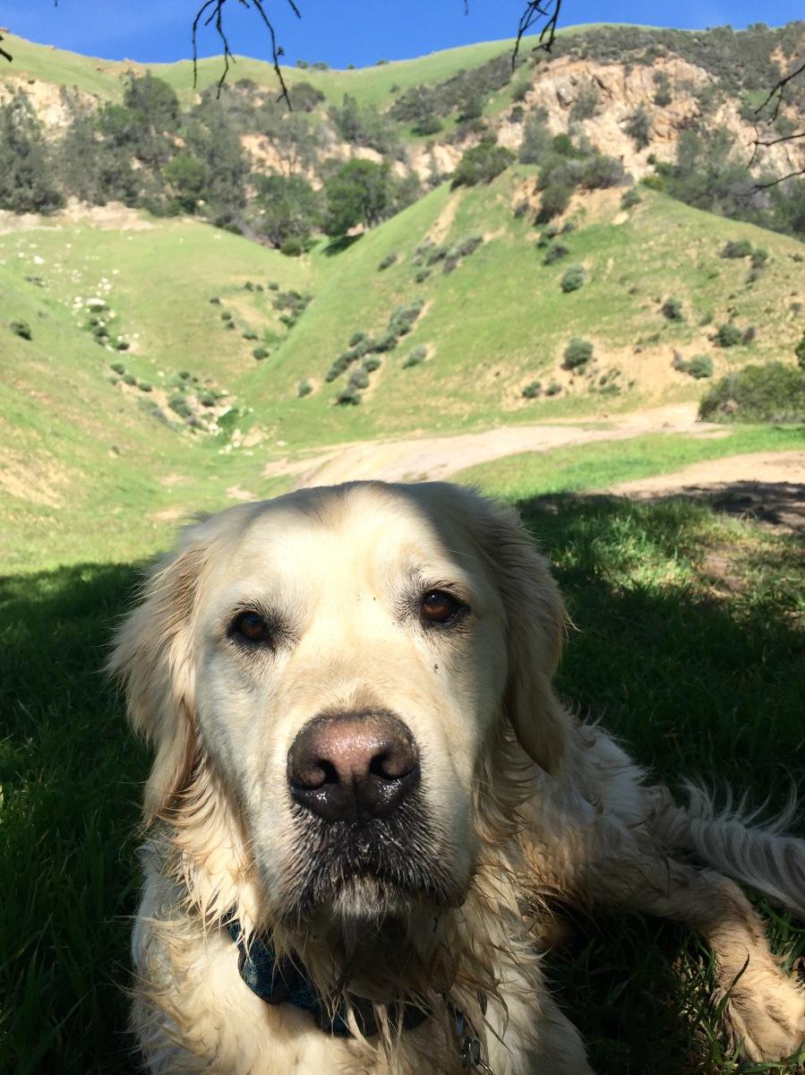 My BEST hiking partner!